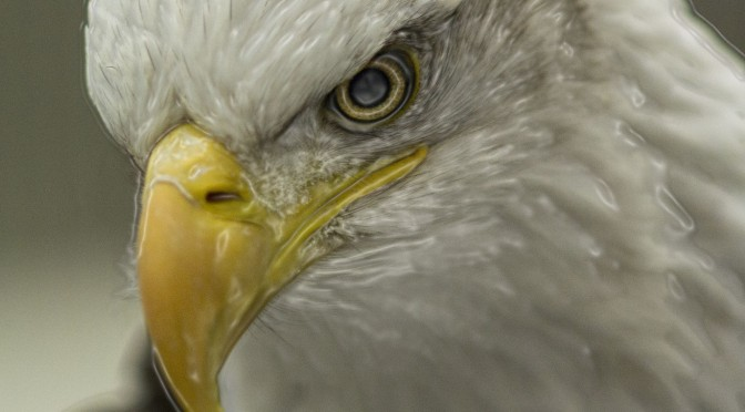 Examples of Eagle Photo Art