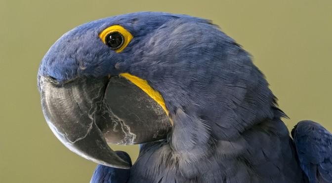 Bird Portraiture
