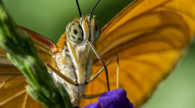 Images of Butterflies Feeding