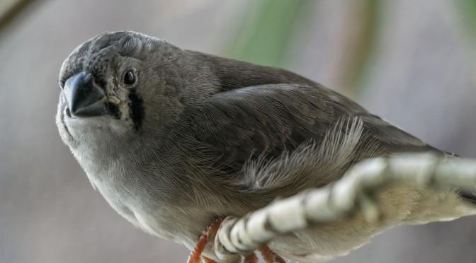 Using extension tubes to photograph small birds