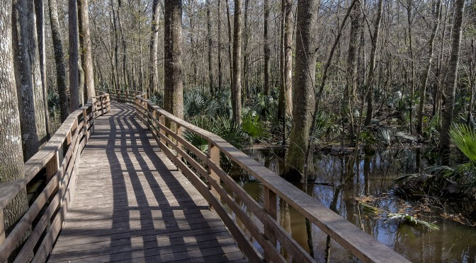Francis Beider Forest at Four Holes Swamp