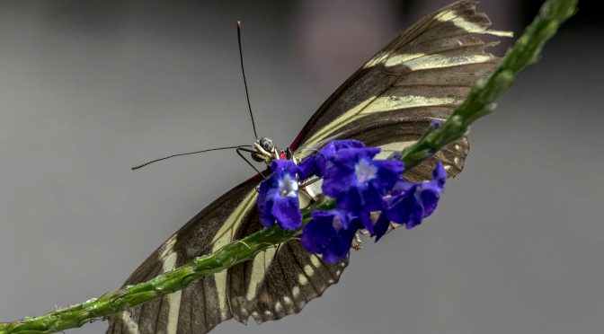 Butterfly images with Nikon 1 J5