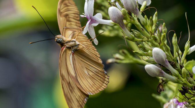 Nikon 1 J5 Butterfly Photography