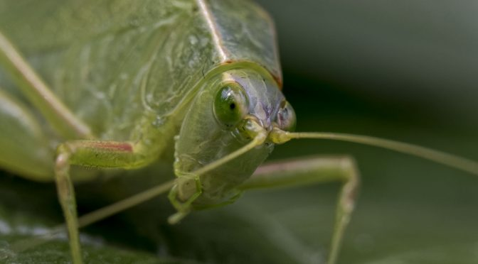 Leafhopper with 30-110mm
