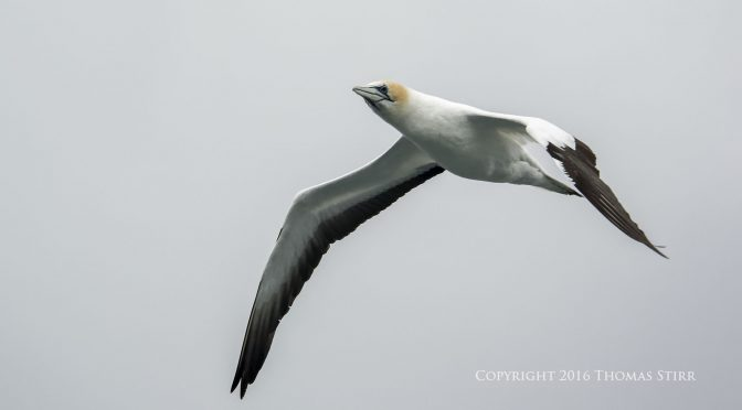 New Zealand Sea Birds and Mammals