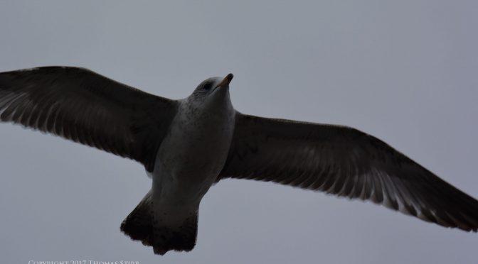 Underexposed bird-in-flight image corrections