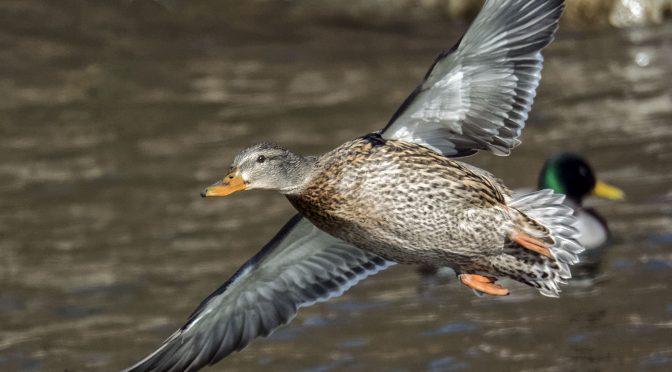 V3 Sample Birds-in-flight Images