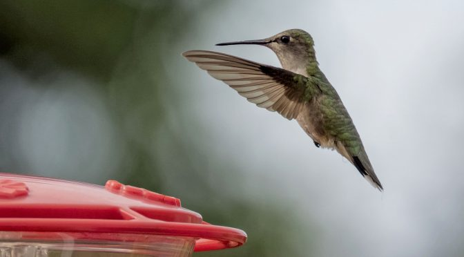 Test Images of a Hummingbird in Flight at 60 FPS