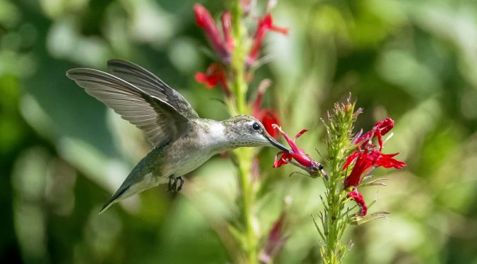 Hummingbird Images Captured at Various Shutter Speeds