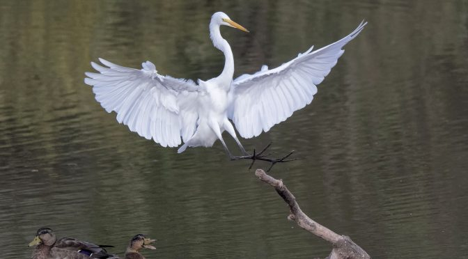 Egret Landing on Branch – Post Processing Considerations