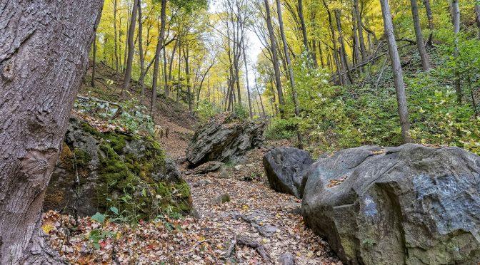 Niagara Gorge Forest Walk