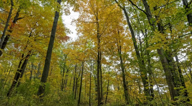 Forest Photography Composition Considerations
