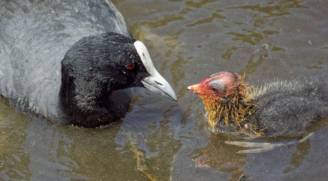 North Island Bird Photography