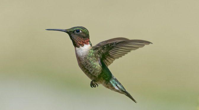 Bird Photography Presentation