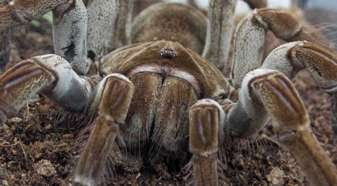 Olympus TG-5 Spider Images