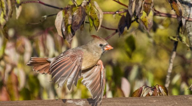 Small Birds Taking Flight