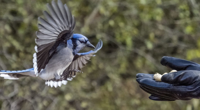 Photographing Incoming Birds