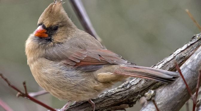 Photographing Small Birds Handheld