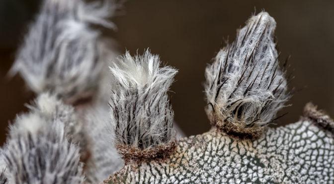 Hi Res Cactus Images