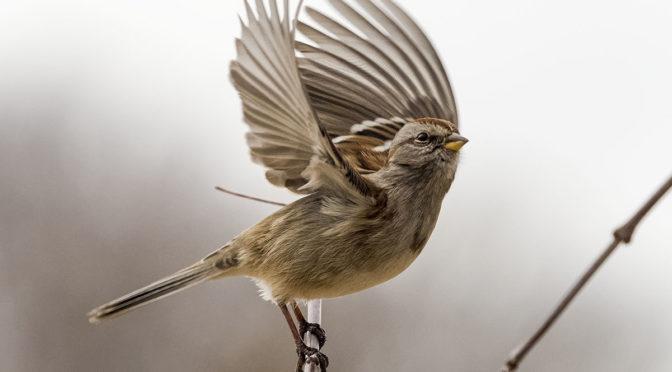 Sparrow In-Flight