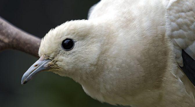 Nikon 1 Versus Olympus for Bird Photography