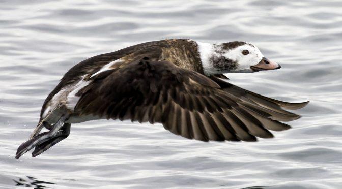 Using Bird Detection AI