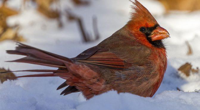 Soft Bird Photographs