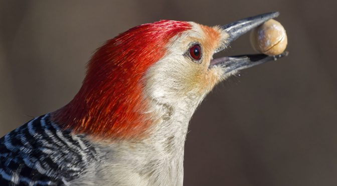 Photographing Woodpeckers with Bird AI