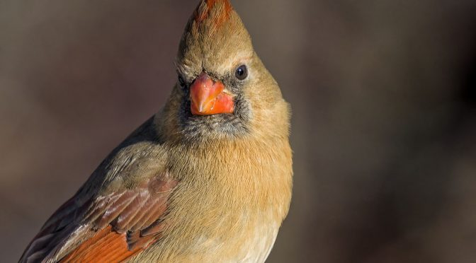Cardinal Images at 1120 mm