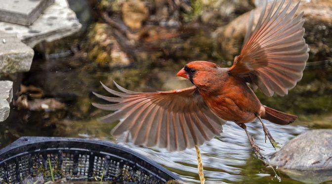 Habitual Bird Behaviour
