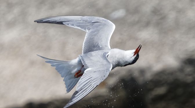 Tracking with Terns
