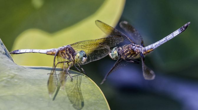 1/4 Second Dragonfly Gift