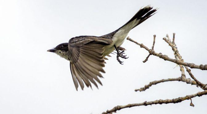 Online Birding Reference