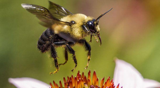 Bees In-Flight Test